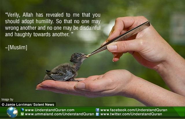inspirationverilyallahhasrevealedtome_humility